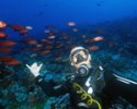 edp-category-recreational-fun-dives.jpg_category