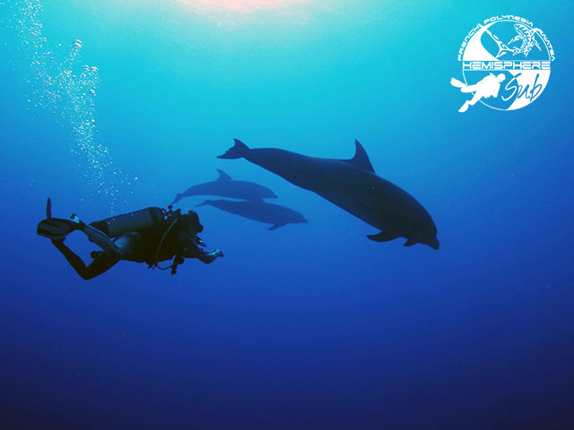 HemisphereSub Raiatea - PRIVATE Fun Dives - 6-10 persons