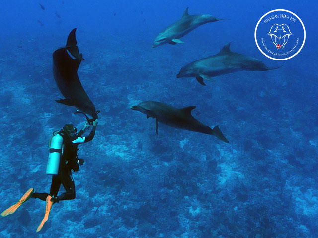 Rangiroa Diving Center - Fun Dives - day & sunset