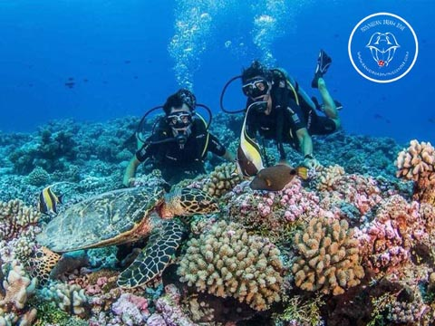 Rangiroa Diving Center - PADI Advanced Open Water Diver - (3 Days)