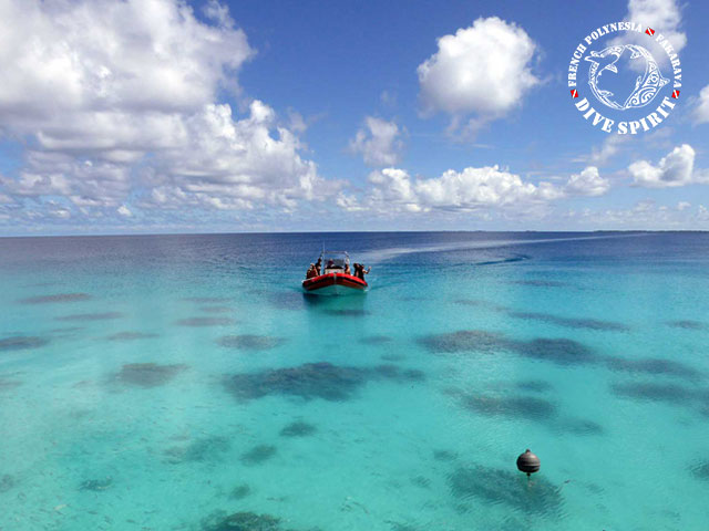 Dive Spirit Fakarava - Fun Dives - Diving Day Trip in Toau