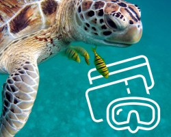 Multi-Islands - Diving Tickets - (eTickets) | Tickets | eDivingPass