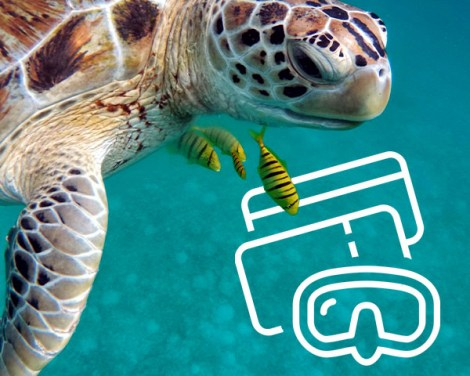 Multi-Islands - Diving Tickets - (eTickets) | Tikehau | eDivingPass