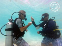Dive Spirit Fakarava - CEDIP/ANMP Level1 - (2 Days) | Certifications | eDivingPass