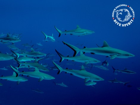 Dive Spirit Fakarava - Pack 6 Dives North + 2 South - & 1 Meal, 1-10 persons | Combos | eDivingPass