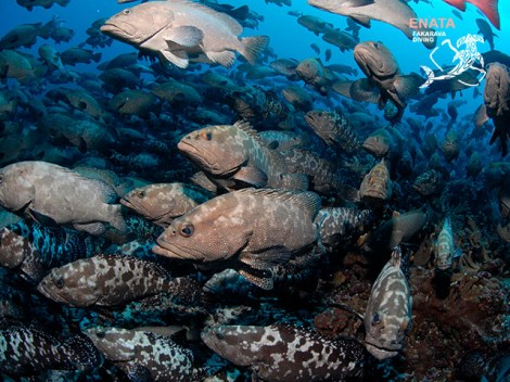 Enata Fakarava Diving - PRIVATE Fun Dives - 3-5 persons | Fun Dives - Private | eDivingPass