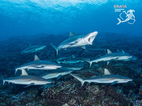 Enata Fakarava Diving - Fun Dives | Booking | eDivingPass