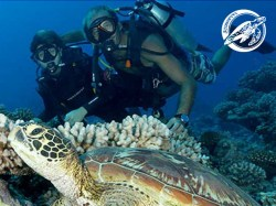 Scubapiti Moorea - SSI Open Water Diver - (4 Days) | Certifications | eDivingPass