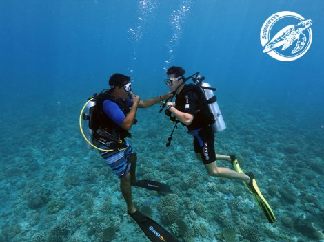 Scubapiti Moorea - CEDIP/ANMP Level2 - (8 Days) | ANMP/CEDIP Certifications | eDivingPass