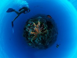 Multi-Islands Diving Pass - with Dates Free - Shareable by 2 Persons | Diving Pass | eDivingPass