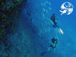 HemisphereSub Raiatea - FFESSM/CMAS Level1 - (3 Days) | Certifications | eDivingPass