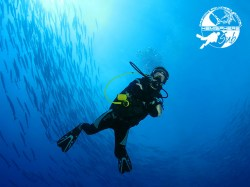 HemisphereSub Raiatea - PRIVATE Fun Dives - 1-5 persons | Private Dives | eDivingPass