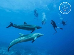 Rangiroa Diving Center - PADI Divemaster - (30 Jours) | PADI Certifications | eDivingPass