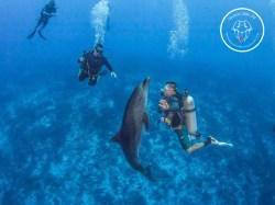 Rangiroa Diving Center - FFESSM/CMAS Niveau3 - (8 Jours) | FFESSM/CMAS Certifications | eDivingPass