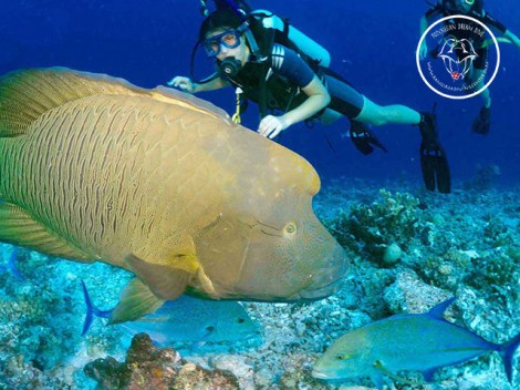 Rangiroa Diving Center - SDI Open Water Scuba Divers - (3 Days) | SDI Certifications | eDivingPass