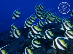 Rangiroa Diving Center - Discovery dives | Discovery Dives | eDivingPass