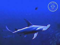Rangiroa Diving Center - PADI Deep Diver - (2 Days) | Specialties | eDivingPass