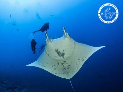 The 6 Passengers - PADI Open Water Diver - (4 Days) | Certifications | eDivingPass