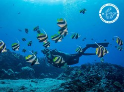 The 6 Passengers - PRIVATE Fun Dives - 1-5 persons | Fun Dives - Private | eDivingPass