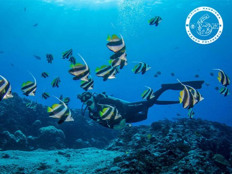The 6 Passengers - PRIVATE Fun Dives - 1-5 persons | Private Dives | eDivingPass
