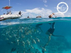 The 6 Passengers - Snorkeling | Snorkeling in Excursions | eDivingPass