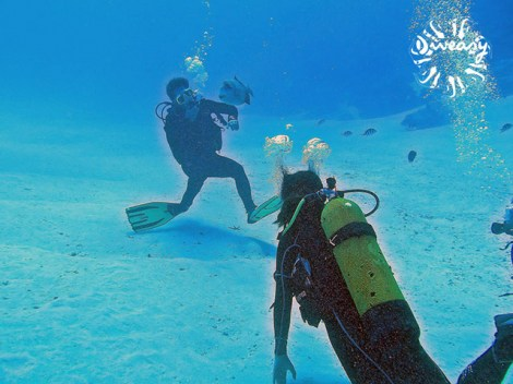 Diveasy Bora-Bora - Fun Dives | Booking | eDivingPass