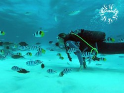 Diveasy Bora-Bora - Refresh dives | Refresh Dives | eDivingPass