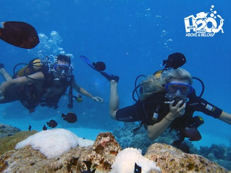 H2O Bora-Bora - PRIVATE Discovery dives | Introductory Dives | eDivingPass
