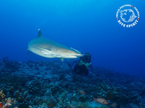 Dive Spirit Fakarava - Fun Dives - Diving Day Trip in Toau | Exploration Dives | eDivingPass