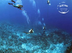 Blue Way Manihi - Fun Dives | Fun Dives | eDivingPass