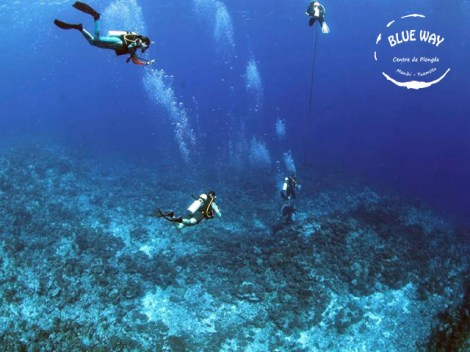Blue Way Manihi - Fun Dives | Exploration Dives | eDivingPass