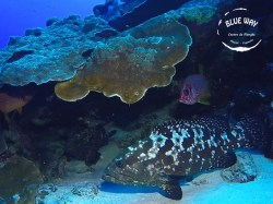 Blue Way Manihi - Snorkeling | Snorkeling in Excursions | eDivingPass