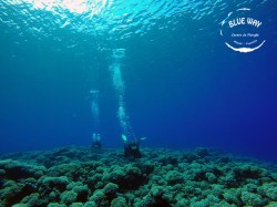 Blue Way Manihi - FFESSM/CMAS Level1 - (3 Days) | FFESSM/CMAS Certifications | eDivingPass