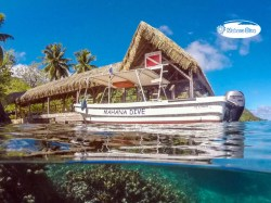 Mahana Dive - PRIVATE Fun Dives - 3 persons | Private Dives | eDivingPass