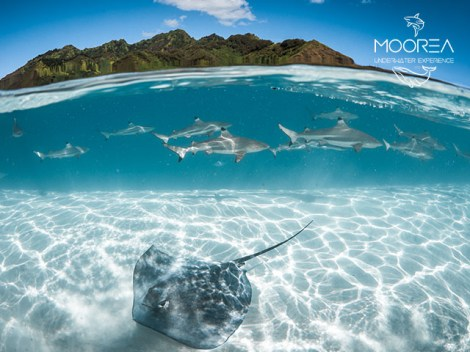 Moorea Underwater Experience - PRIVATE Snorkeling & Photos Sunset - 2h 1-5 persons | Snorkeling on Private | eDivingPass
