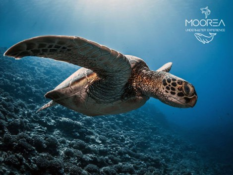 Moorea Underwater Experience - PRIVATE Fun Dives Snorkeling - 1 day 1-5 persons | Snorkeling | eDivingPass