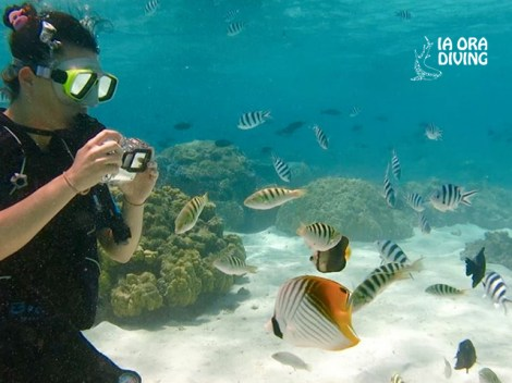 Ia Ora Diving - Snorkeling | Snorkeling in Excursions | eDivingPass