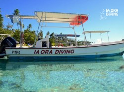 Ia Ora Diving - PRIVATE Fun Dives - 1-4 persons | Fun Dives - Private | eDivingPass