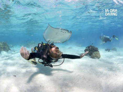 Ia Ora Diving - Discovery dives | Discovery Dives | eDivingPass