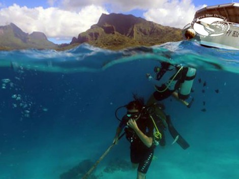 Moorea Blue Diving - CEDIP/ANMP Niveau1 - (3 Jours) | ANMP/CEDIP Certifications | eDivingPass
