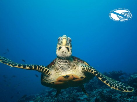 Moorea Blue Diving - PRIVATE Fun Dives - morning, 1-6 persons | Private Dives | eDivingPass