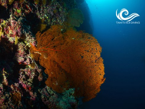Tahiti Nui Diving - FFESSM/CMAS Level3 - (5 Days) | FFESSM/CMAS | eDivingPass