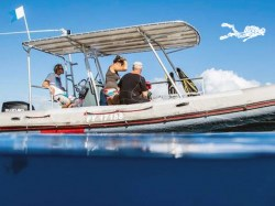 Tahiti Iti Diving - Whales Excursions | Dolphin and Whale in Excursions | eDivingPass