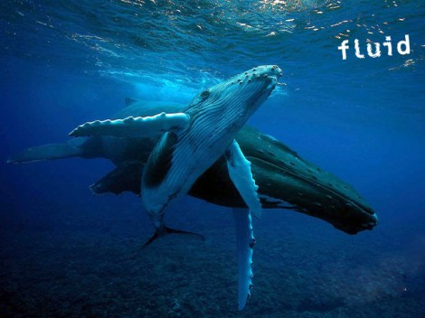 Fluid Tahiti - Whales Excursions | Dolphin and Whale | eDivingPass