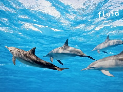 Fluid Tahiti - Dolphins Excursions | Dolphins  & Whales | eDivingPass