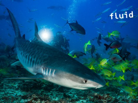 Fluid Tahiti - Fun Dives | Booking | eDivingPass