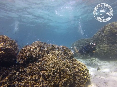Tahaa Diving - Discovery dives | Discovery Dives | eDivingPass