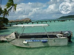 Tahaa Diving - PADI Open Water Diver - Referral (2 Days) | Certifications | eDivingPass