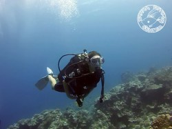 Tahaa Diving - Refresh dives | Refresh Dives | eDivingPass