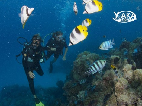 Yaka Plongée - Discovery dives | Discovery Dives | eDivingPass